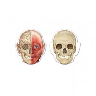 Dvipusis magnetinis žmogaus kūnas