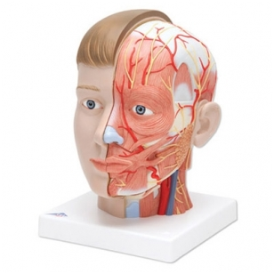 Galva su kaklu, 4 dalys
