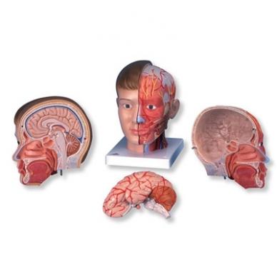 Galva su kaklu, 4 dalys 2