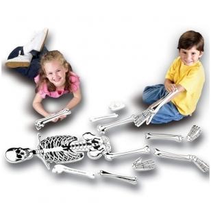 Grindų dėlionė iš skeleto dalių
