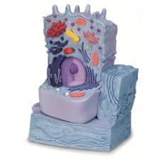 Gyvūno ląstelės modelis