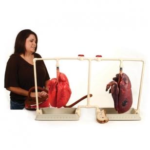 Imitacinių rūkančiojo plaučių palyginamasis rinkinys su dvigubu stovu