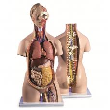 Klasikinis torso modelis su atviru kaklu ir nugara, 18 dalių