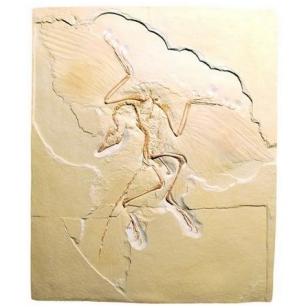 "Litografija ""Archaeopteryx"""