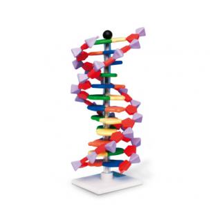 Mini DNR modelis, 12 sluoksnių
