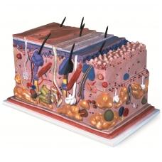 Odos bloko modelis (padidintas 70 kartų)