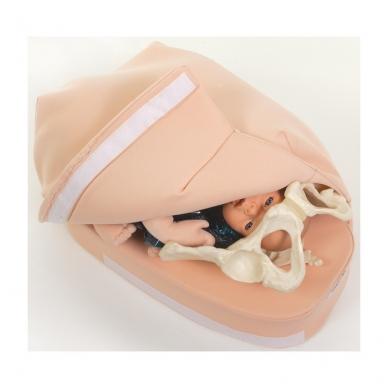 Pilvo, nėštumo metu, apčiuopos modelis (lietuvių kalba) 4