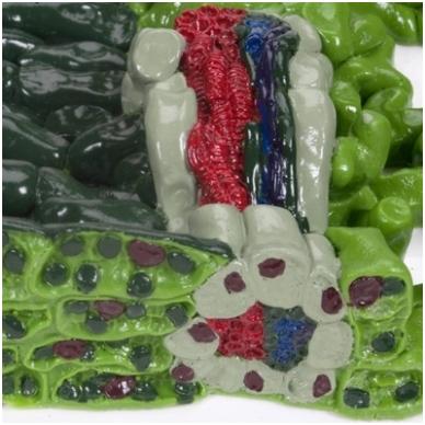 Reljefinis lapo struktūros modelis 4