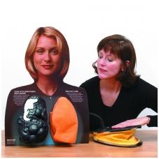 Lou-Wheeze™ rūkančiojo plaučių palyginamasis modelis
