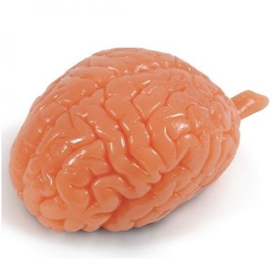Smegenų modelis iš Biolike 2™ medžiagos