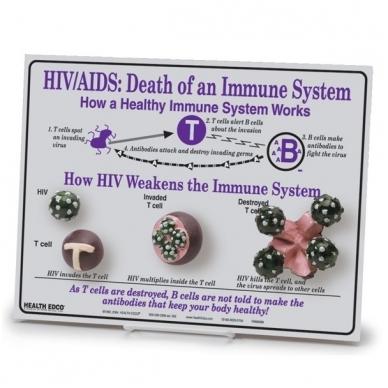 """Stendas """"ŽIV / AIDS: Pavojus imuninei sistemai"""""""